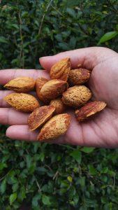 Manfaat Baik Kacang Almond untuk Perawatan Kulit