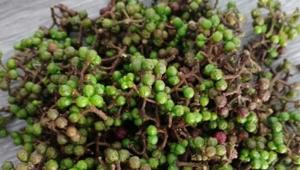 Rempah Andaliman yang populer untuk Masakan Sumatera Utara